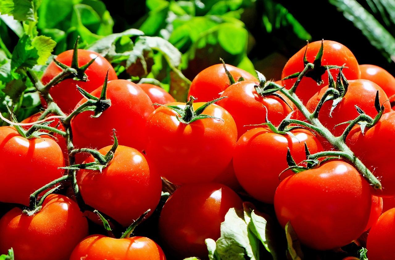 トマト ダイエット 栄養